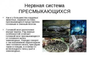 Нервная система ПРЕСМЫКАЮЩИХСЯ Как и у большинства хордовых животных, нервная си