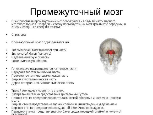 Промежуточный мозг В эмбриогенезе промежуточный мозг образуется на задней части первого мозгового пузыря. Спереди и сверху промежуточный мозг граничит с передним, а снизу и сзади - со средним мозгом. Структура Промежуточный мозг подразделяется на: Т…