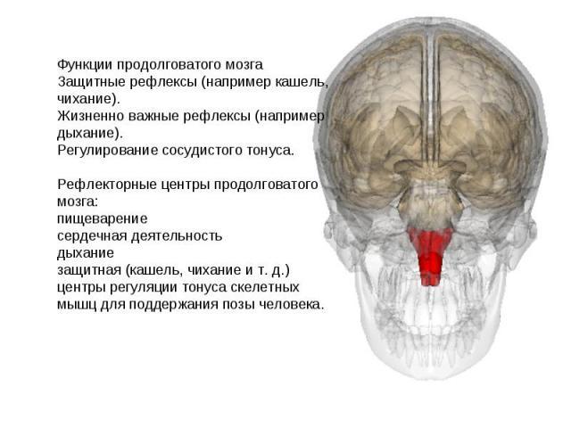 Функции продолговатого мозга Защитные рефлексы (например кашель, чихание). Жизненно важные рефлексы (например дыхание). Регулирование сосудистого тонуса. Рефлекторные центры продолговатого мозга: пищеварение сердечная деятельность дыхание защитная (…