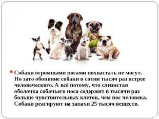 Собаки огромными носами похвастать не могут. Но зато обоняние собаки в сотни тыс