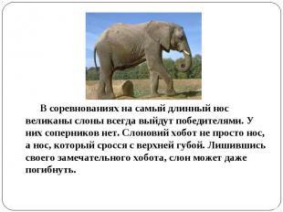 В соревнованиях на самый длинный нос великаны слоны всегда выйдут победителями.