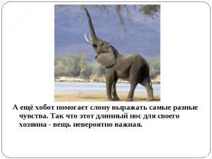 А ещё хобот помогает слону выражать самые разные чувства. Так что этот длинный н