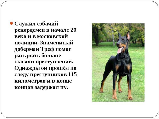 Служил собачий рекордсмен в начале 20 века и в московской полиции. Знаменитый доберман Треф помог раскрыть больше тысячи преступлений. Однажды он прошёл по следу преступников 115 километров и в конце концов задержал их.
