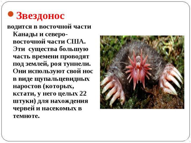 Звездонос водится в восточной части Канады и северо-восточной части США. Эти существа большую часть времени проводят под землей, роя туннели. Они используют свой нос в виде щупальцевидных наростов (которых, кстати, у него целых 22 штуки) для нахожде…
