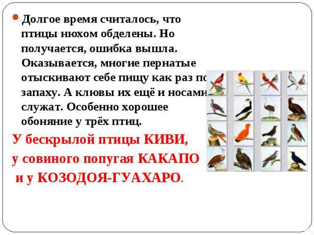 Долгое время считалось, что птицы нюхом обделены. Но получается, ошибка вышла. Оказывается, многие пернатые отыскивают себе пищу как раз по запаху. А клювы их ещё и носами служат. Особенно хорошее обоняние у трёх птиц. У бескрылой птицы КИВИ, у сови…
