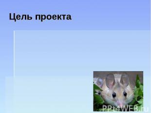 Цель проекта Узнать, какие виды декоративных мышей бывают, чтобы правильно за ни
