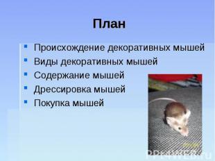 План Происхождение декоративных мышей Виды декоративных мышей Содержание мышей Д