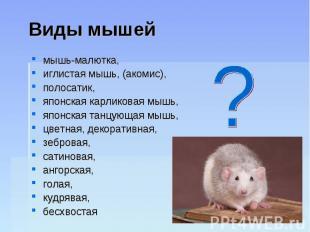 Виды мышей мышь-малютка, иглистая мышь, (акомис), полосатик, японская карликовая
