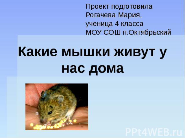 Проект подготовила Рогачева Мария, ученица 4 класса МОУ СОШ п.Октябрьский Какие мышки живут у нас дома