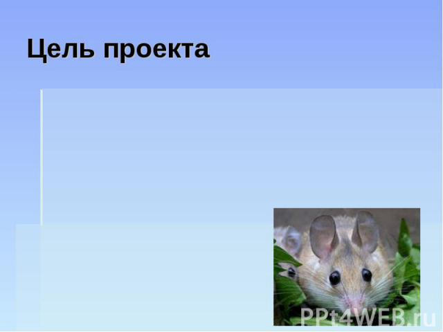 Цель проекта Узнать, какие виды декоративных мышей бывают, чтобы правильно за ними ухаживать