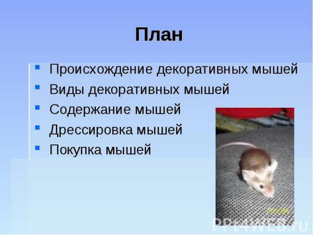 План Происхождение декоративных мышей Виды декоративных мышей Содержание мышей Дрессировка мышей Покупка мышей
