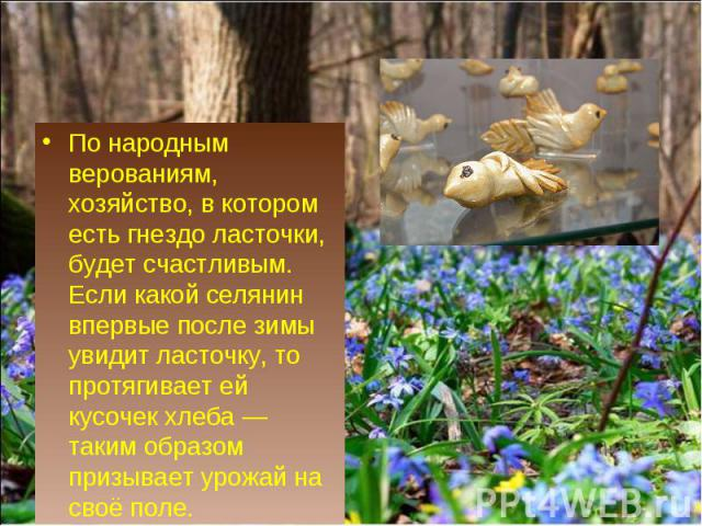 По народным верованиям, хозяйство, в котором есть гнездо ласточки, будет счастливым. Если какой селянин впервые после зимы увидит ласточку, то протягивает ей кусочек хлеба— таким образом призывает урожай на своё поле.