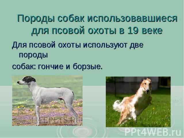 Породы собак использовавшиеся для псовой охоты в 19 веке Для псовой охоты используют две породы собак: гончие и борзые.