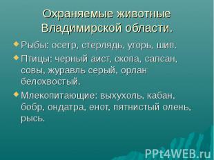 Охраняемые животные Владимирской области.Рыбы: осетр, стерлядь, угорь, шип. Птиц
