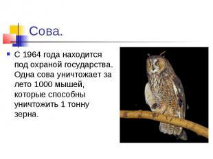 Сова.С 1964 года находится под охраной государства. Одна сова уничтожает за лето