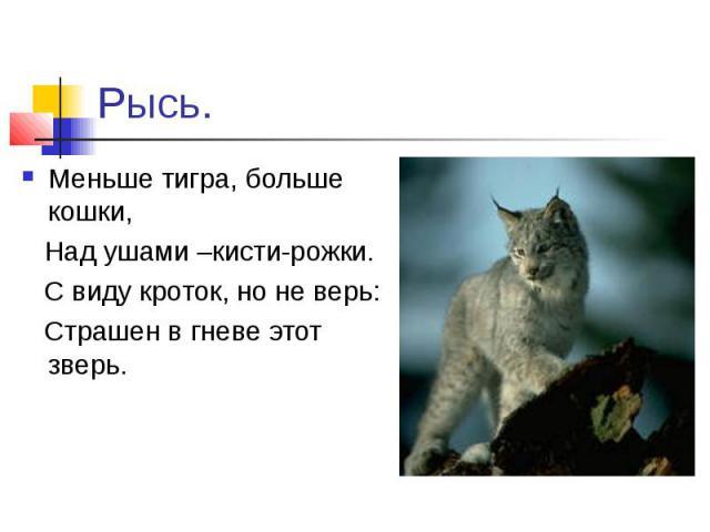 Рысь.Меньше тигра, больше кошки, Над ушами –кисти-рожки. С виду кроток, но не верь: Страшен в гневе этот зверь.