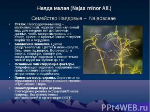 Наяда малая (Najas minor All.) Семейство Наядовые – Najadaceae Статус. Неопредел