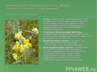 Цмин песчаный. Helichrysum arenarium (L.) Moench Семейство Астровые (Сложноцветн