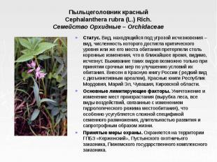 Пыльцеголовник красный Cephalanthera rubra (L.) Rich. Семейство Орхидные – Orchi