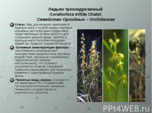 Ладьян трехнадрезанный Corallorhiza trifida Chatel. Семейство Орхидные – Orchida
