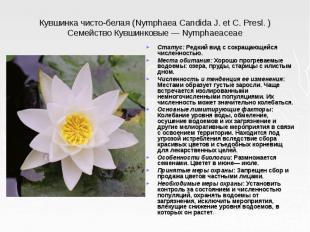 Кувшинка чисто-белая (Nymphaea Candida J. et С. Presl. ) Семейство Кувшинковые —