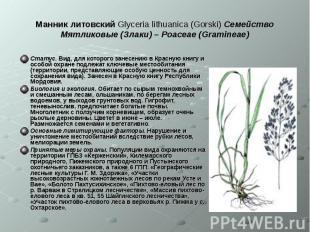 Манник литовский Glyceria lithuanica (Gorski) Семейство Мятликовые (Злаки) – Poa