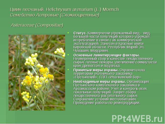 Цмин песчаный. Helichrysum arenarium (L.) Moench Семейство Астровые (Сложноцветные) Asteraceae (Compositae) Статус. Коммерчески угрожаемый вид – вид, большей части популяций которого угрожает истребление в связи с их коммерческой эксплуатацией. Зане…