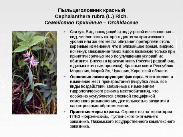 Пыльцеголовник красный Cephalanthera rubra (L.) Rich. Семейство Орхидные – Orchidaceae Статус. Вид, находящийся под угрозой исчезновения – вид, численность которого достигла критического уровня или же его места обитания претерпели столь коренные изм…