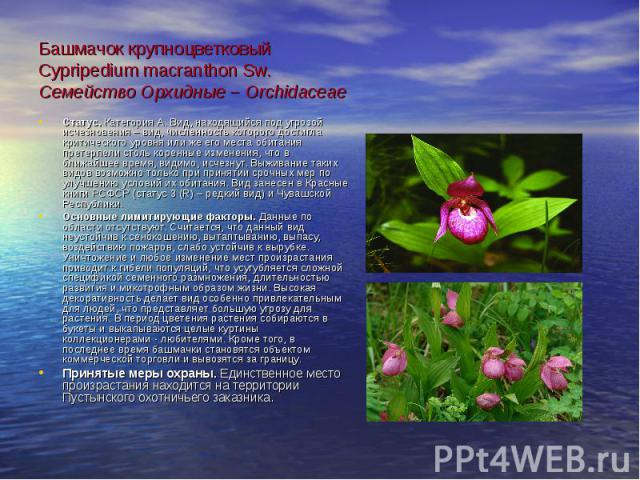 Башмачок крупноцветковый Cypripedium macranthon Sw. Семейство Орхидные – Orchidaceae Статус. Категория А. Вид, находящийся под угрозой исчезновения – вид, численность которого достигла критического уровня или же его места обитания претерпели столь к…