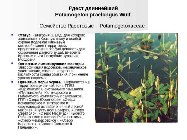 Рдест длиннейший Potamogeton praelongus Wulf. Семейство Рдестовые – Potamogetonaceae Статус. Категория З. Вид, для которого занесению в Красную книгу и особой охране подлежат ключевые местообитания (территории, представляющие особую ценность для сох…
