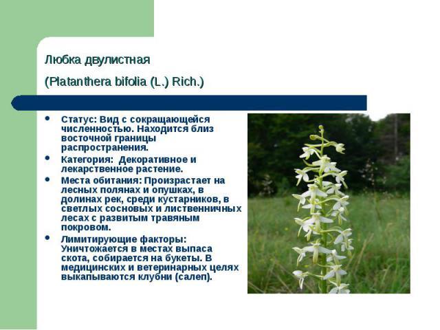 Любка двулистная (Platanthera bifolia (L.) Rich.) Статус: Вид с сокращающейся численностью. Находится близ восточной границы распространения. Категория: Декоративное и лекарственное растение. Места обитания: Произрастает на лесных полянах и опушках…