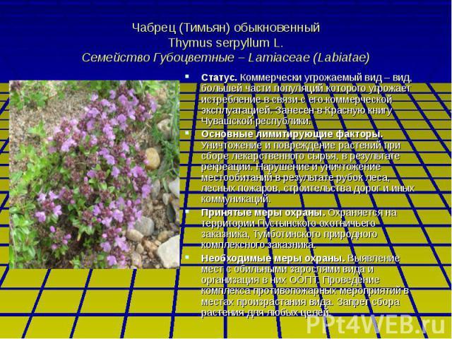 Чабрец (Тимьян) обыкновенный Thymus serpyllum L. Семейство Губоцветные – Lamiaceae (Labiatae) Статус. Коммерчески угрожаемый вид – вид, большей части популяций которого угрожает истребление в связи с его коммерческой эксплуатацией. Занесен в Красную…