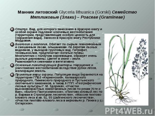 Манник литовский Glyceria lithuanica (Gorski) Семейство Мятликовые (Злаки) – Poaceae (Gramineae) Статус. Вид, для которого занесению в Красную книгу и особой охране подлежат ключевые местообитания (территории, представляющие особую ценность для сохр…