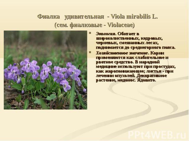 Фиалка удивительная - Viola mirabilis L. (сем. фиалковые - Violaceae) Экология. Обитает в широколиственных, кедровых, черневых, смешанных лесах, поднимается до среднегорного пояса. Хозяйственное значение. Корни применяются как слабительное и р…