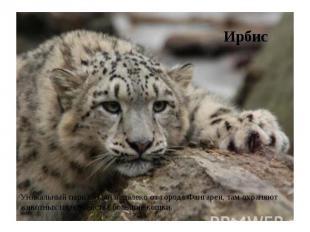 Ирбис Уникальный парк создан недалеко от города Фангареи, там охраняют животных