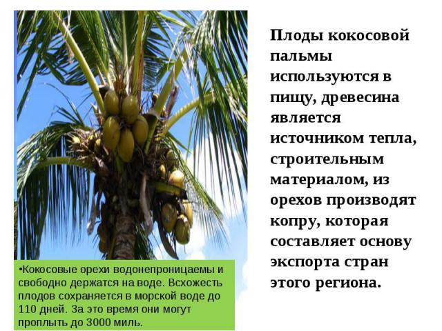 Плоды кокосовой пальмы используются в пищу, древесина является источником тепла, строительным материалом, из орехов производят копру, которая составляет основу экспорта стран этого региона. Кокосовые орехи водонепроницаемы и свободно держатся на вод…