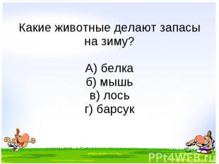 Какие животные делают запасы на зиму? А) белка б) мышь в) лось г) барсук