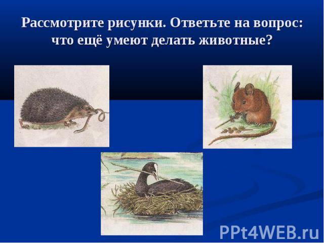 Рассмотрите рисунки. Ответьте на вопрос: что ещё умеют делать животные?