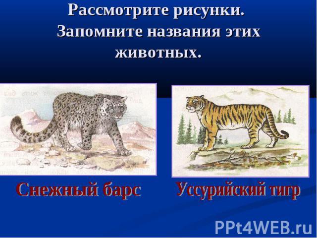 Рассмотрите рисунки. Запомните названия этих животных. Снежный барс Уссурийский тигр