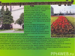 Какую роль выполняют растения в городе и как они влияют на качество окружающей с