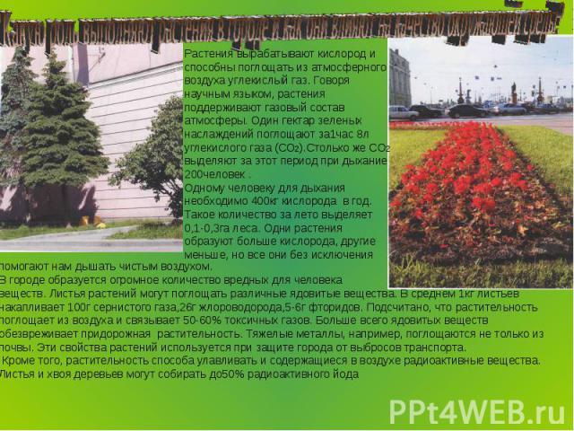 Какую роль выполняют растения в городе и как они влияют на качество окружающей среды? Растения вырабатывают кислород и способны поглощать из атмосферного воздуха углекислый газ. Говоря научным языком, растения поддерживают газовый состав атмосферы. …