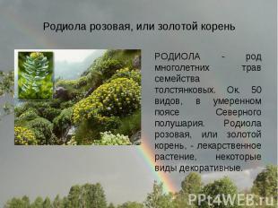 Родиола розовая, или золотой корень РОДИОЛА - род многолетних трав семейства тол