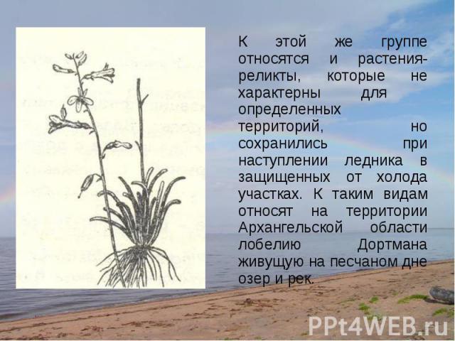К этой же группе относятся и растения-реликты, которые не характерны для определенных территорий, но сохранились при наступлении ледника в защищенных от холода участках. К таким видам относят на территории Архангельской области лобелию Дортмана живу…