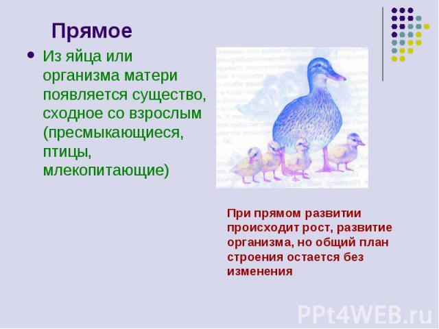 Прямое Из яйца или организма матери появляется существо, сходное со взрослым (пресмыкающиеся, птицы, млекопитающие) При прямом развитии происходит рост, развитие организма, но общий план строения остается без изменения
