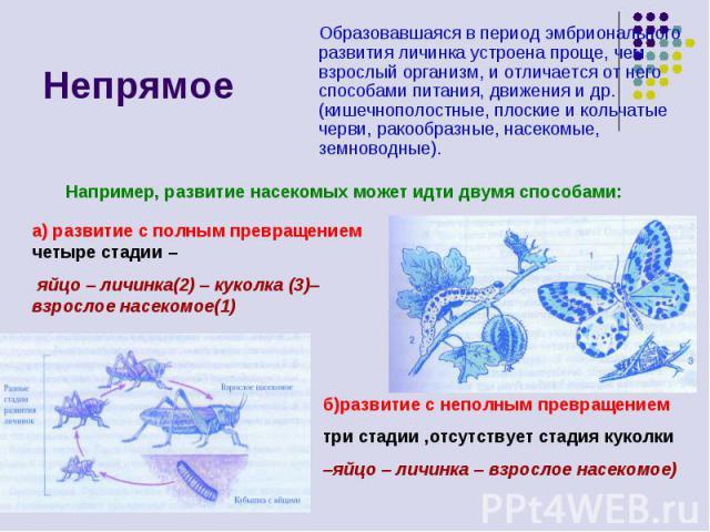 Непрямое Образовавшаяся в период эмбрионального развития личинка устроена проще, чем взрослый организм, и отличается от него способами питания, движения и др. (кишечнополостные, плоские и кольчатые черви, ракообразные, насекомые, земноводные). а) ра…