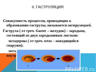 II. Гаструляция Совокупность процессов, приводящих к образованию гаструлы, назыв