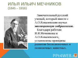 Илья Ильич Мечников (1845 – 1916) Замечательный русский ученый, который вместе с