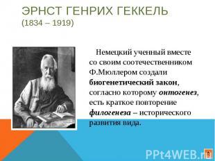 Эрнст Генрих Геккель (1834 – 1919) Немецкий ученный вместе со своим соотечествен