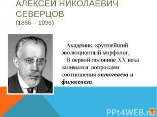 Алексей Николаевич Северцов (1866 – 1936) Академик, крупнейший эволюционный морф