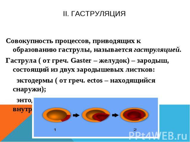II. Гаструляция Совокупность процессов, приводящих к образованию гаструлы, называется гаструляцией. Гаструла ( от греч. Gaster – желудок) – зародыш, состоящий из двух зародышевых листков: эктодермы ( от греч. ectos – находящийся снаружи); энтодермы …